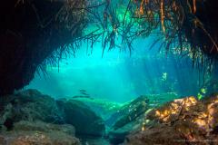 Casa Cenote, Cenoten, Mexiko, Tauchen, Yucatan-3