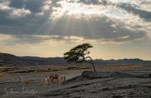 Desert Egypt 2020