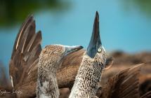 Galapagos über Wasser
