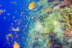 10_Coral-Reef-Komodo