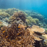 32_Reef-Misool