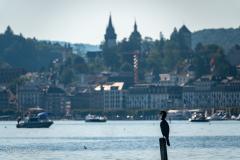 Kormoran vor Luzern