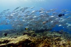Pulau Pef, Raja Ampat-39