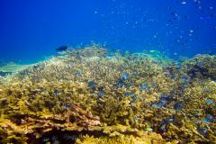 Pulau Pef, Raja Ampat-6